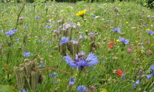 Werken aan biodiversiteit