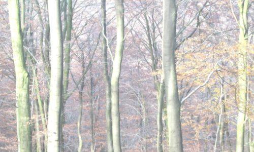 Grote zorgen over de toekomst van onze bossen